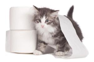 Katze geht nicht auf Katzenklo