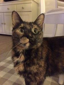 Roni unsere Katzenklo Testerin