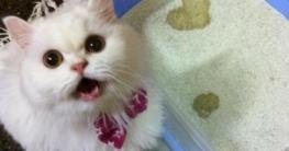 Katzenklo mit Herz